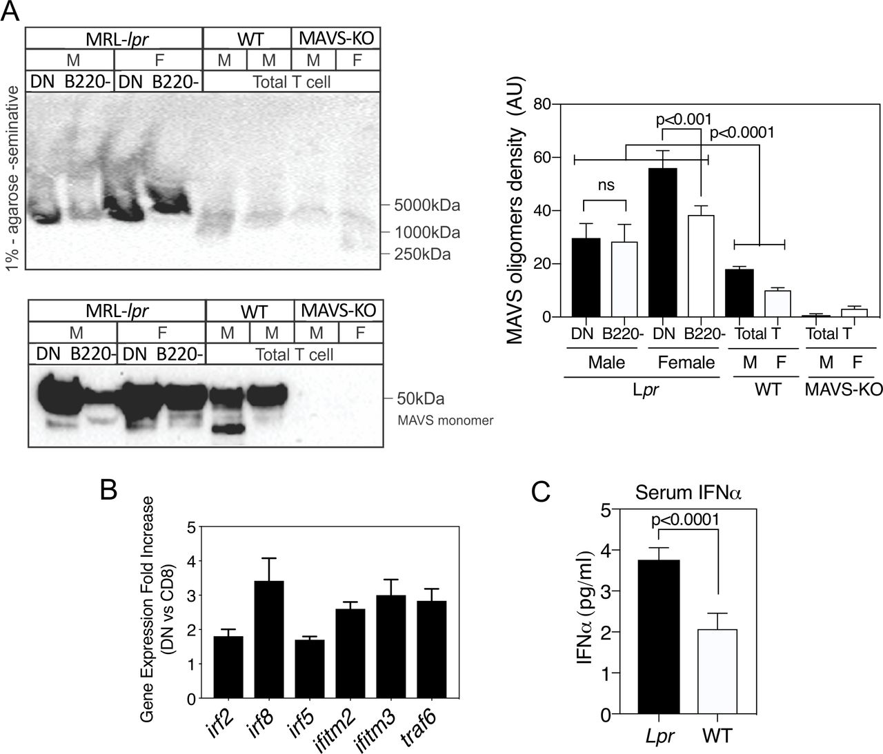 Targeting Mitochondrial Oxidative Stress With MitoQ